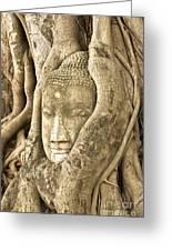 Head Of Buddha Ayutthaya Thailand Greeting Card by Colin and Linda McKie