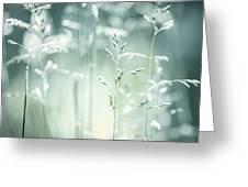 June Green Grass Flowering Greeting Card by Elena Elisseeva