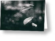 Leaves Greeting Card by Yavuz Sariyildiz
