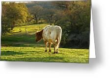 Longhorns Long Day Greeting Card by Joe Jake Pratt