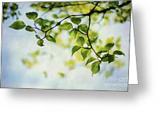 Looking Up Greeting Card by Darren Fisher