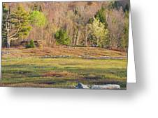 Maine Blueberry Field In Spring Greeting Card by Keith Webber Jr