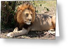 Male Lion On The Masai Mara  Greeting Card by Aidan Moran