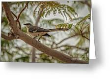 Mockingbird Greeting Card by Robert Bales