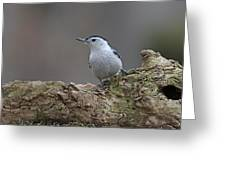 Nuthatch Greeting Card by Jim Nelson