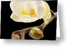 Orchid Greeting Card by Ilze Lucero
