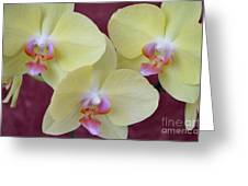Phalaenopsis Fullers Sunset Orchid - No 2 Greeting Card by Mary Deal