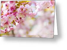 Pink Cherry Blossoms  Greeting Card by Elena Elisseeva