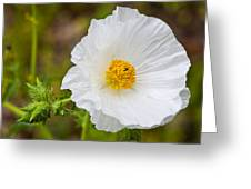 Prickly Poppy Greeting Card by Mark Weaver