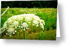 Queen Anne's Lace Greeting Card by Carol Toepke
