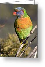 Rainbow Lorikeet Greeting Card by Steven Ralser