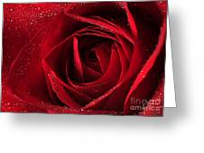 Red Rose Greeting Card by Darren Fisher