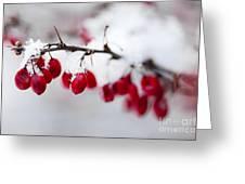 Red Winter Berries Under Snow Greeting Card by Elena Elisseeva