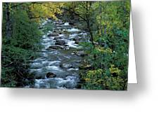 River Greeting Card by Anonymous