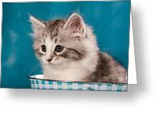 Sibirian Cat Kitten Greeting Card by Doreen Zorn