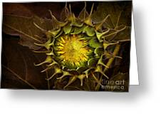 Sunflower Greeting Card by Elena Nosyreva