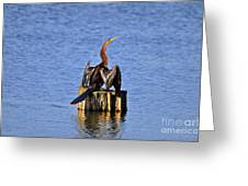 Wet Wings Greeting Card by Al Powell Photography USA