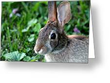 Wild Rabbit Greeting Card by J McCombie