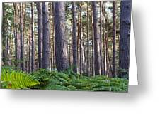 Woods Greeting Card by David Isaacson