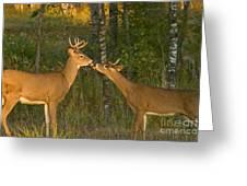 White-tailed Deer Greeting Card by Linda Freshwaters Arndt