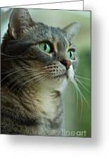 American Shorthair Cat Profile Greeting Card by Amy Cicconi
