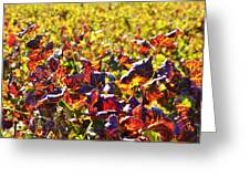 Colors Of Autum.... Greeting Card by Werner Lehmann