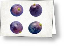 Concord Grapes Greeting Card by Danny Smythe