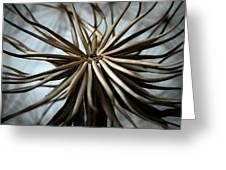 Dandelion Greeting Card by Stelios Kleanthous