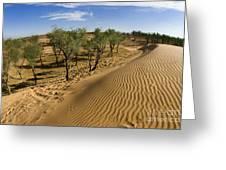 Desert Tamarix Trees Greeting Card by Dan Yeger