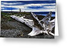 Driftwood On Beach Greeting Card by Thomas R Fletcher
