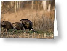 Eastern Wild Turkeys Greeting Card by Linda Freshwaters Arndt