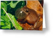 Frog Greeting Card by David Davis