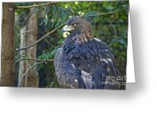 Golden Eagle Greeting Card by Sean Griffin
