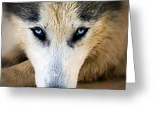 Husky  Greeting Card by Stelios Kleanthous