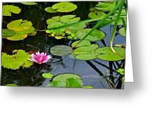 Lilly Pads Greeting Card by Frozen in Time Fine Art Photography