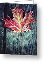 Maple Leaf Greeting Card by Natasha Marco