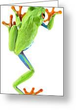 Red Eyed Tree Frog Greeting Card by Dirk Ercken