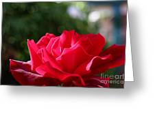 Red Rose Greeting Card by Jacqui Martin