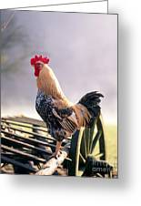 Rooster Greeting Card by Hans Reinhard