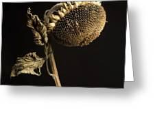 Sunflower Greeting Card by Bernard Jaubert