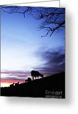 Winter Lambs And Ewes Sunrise Greeting Card by Thomas R Fletcher