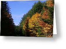 Autumn 9 Greeting Card by J D Owen