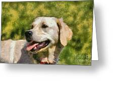 Golden Retriever Portrait Greeting Card by George Atsametakis