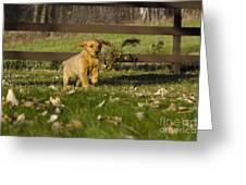 Golden Retriever Pup Greeting Card by Linda Freshwaters Arndt