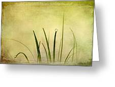 Grass Greeting Card by Svetlana Sewell