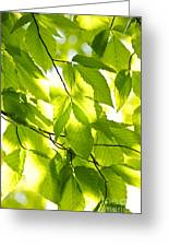 Green Spring Leaves Greeting Card by Elena Elisseeva