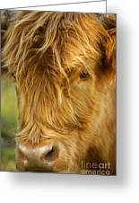 Highland Cow Greeting Card by Brian Jannsen