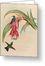 Hummingbirds Greeting Card by Philip Ralley