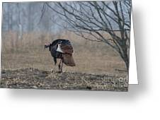 Male Eastern Wild Turkey Greeting Card by Linda Freshwaters Arndt