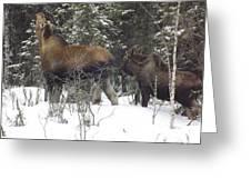 Moose Greeting Card by Jennifer Kimberly